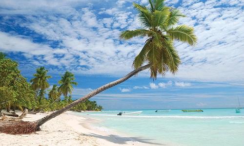 republique-dominicaine-palmier-dominican-republic-palm-tree-1000x600
