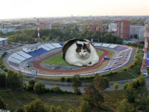 1386216961_kot-na-stadione